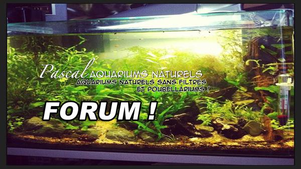 forum Pascal Aquariums Naturels !