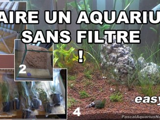 tuto aquarium naturel sans filtre