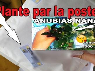 comment envoyer une plante par la poste !