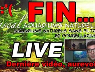 youtube fin