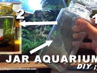 jar aquarium