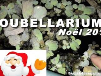 poubellarium à noel