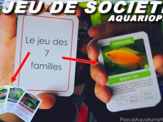 7 familles version aquarium !