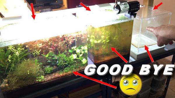 Démantèlement de mes 3 aquariums «stars»