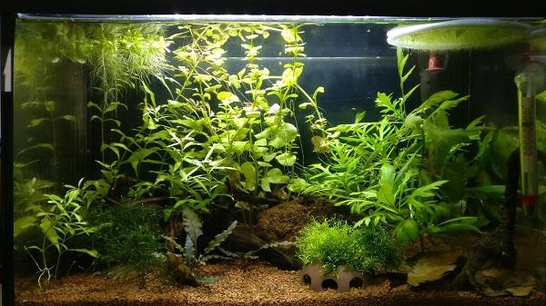 aquarium naturel