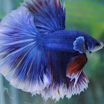Les poissons & aquarium