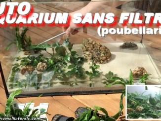 tuto aquarium lowtech poubellarium