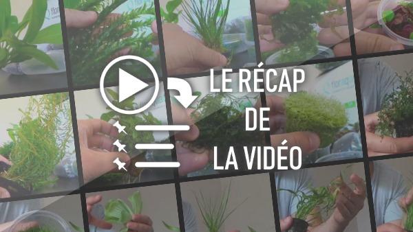 recapvideo1