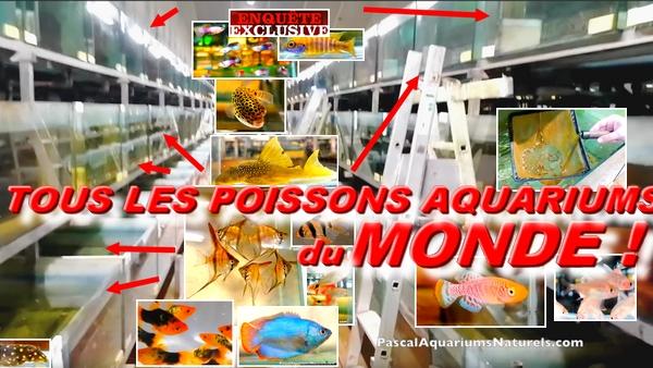 Exclusif : tous les poissons aquariums du monde ! platy, guppy, coridoras, cichlide, crevettes ETC