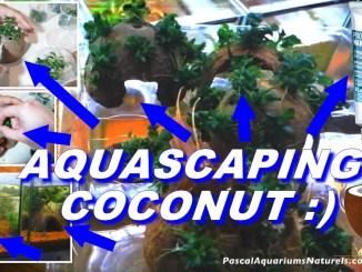 noix de coco aquascaping