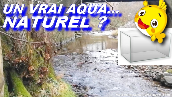 vrai aquarium naturel