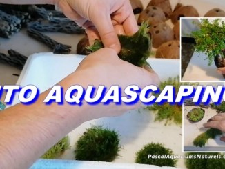 aquascaping mousses