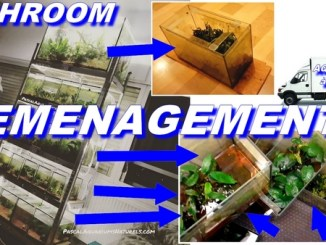demenagement fishroom