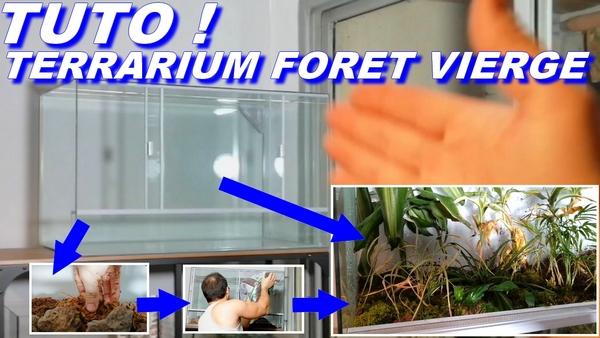 terrarium foret vierge