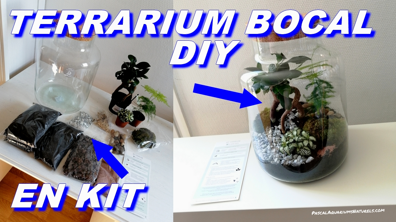 terrarium green touch