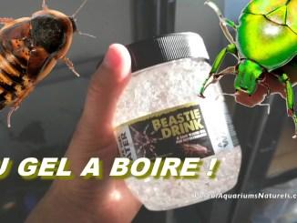 eau gélifiée pour insectes