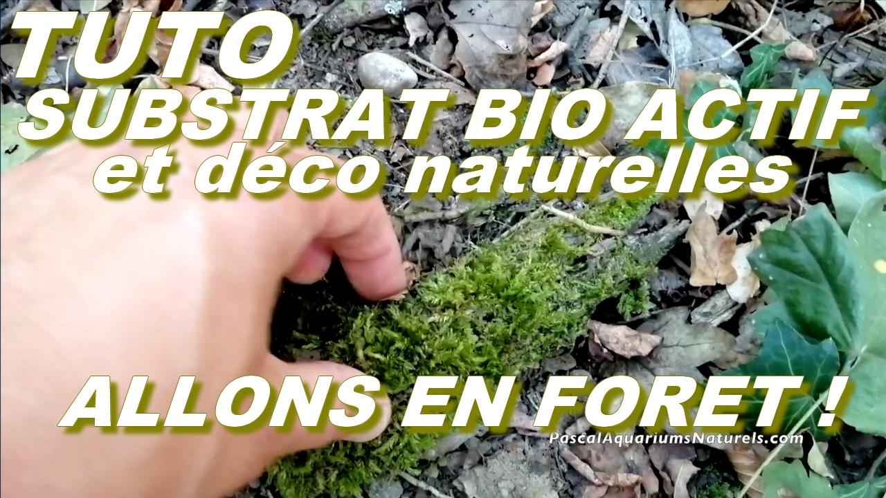 substrat naturel et decoration mousses