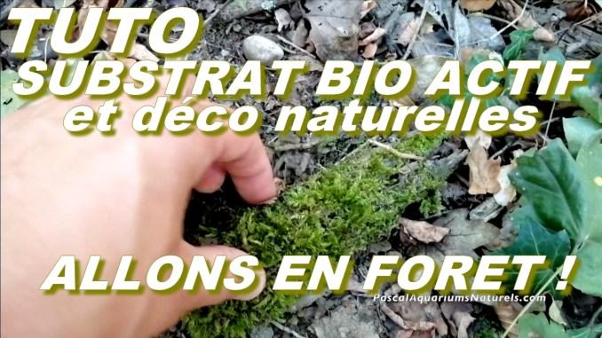 substrat naturel et décoration mousses