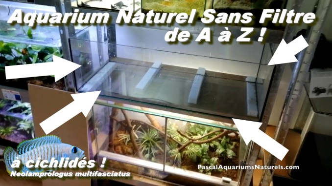 tutoriel aquarium naturel cichlidés