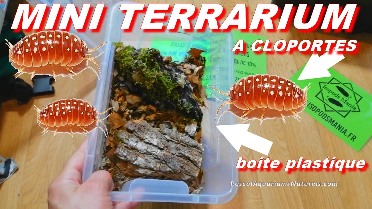 tutoriel forestier cloportes 2