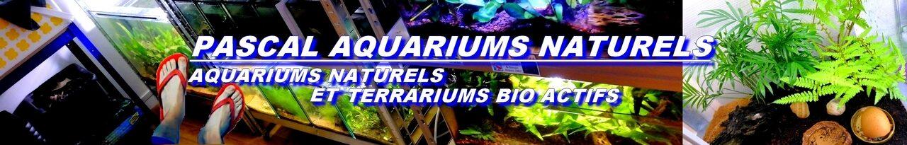 cropped-pascal-aquarium-naturels-tong-2.jpg