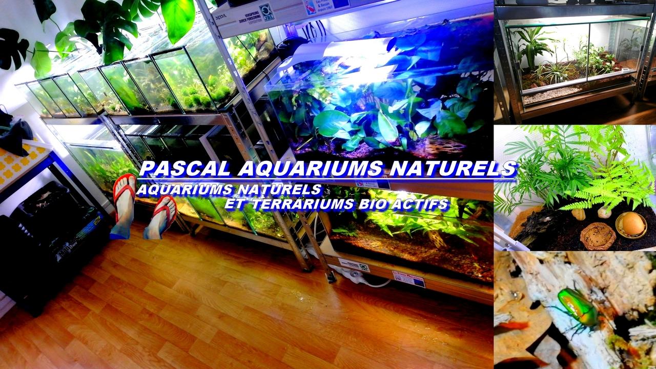 pascal aquarium naturels tong