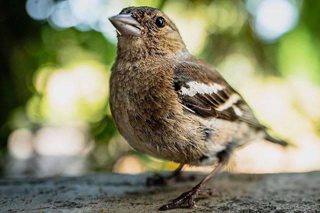 Morning visit, a less than 10cm of my camera. #bird #birds #birdphotography #birdsofinstagram #birdlovers #nature #leicaphotography #leicaq #macro #naturephotography