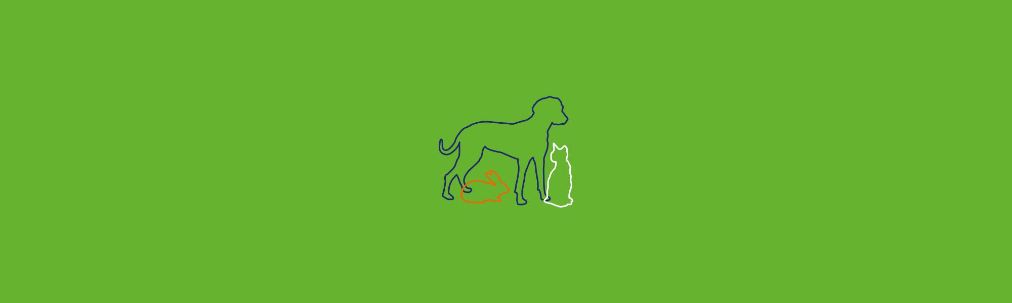 Infographiste Rouen Pascal Ridel Création carte de visite vétérinaire Frantz Cappé