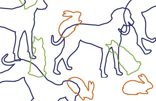 Infographiste Rouen Pascal Ridel Creation carte de visite design vétérinaire Frantz Cappé