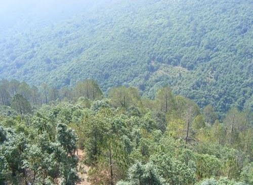 वन क्षेत्र अतिक्रमण वृद्धि