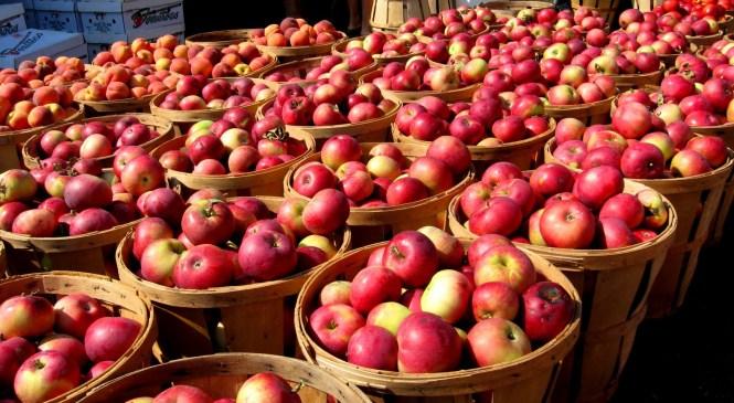जुम्लाबाट १४ करोड कृषिउपज निर्यात