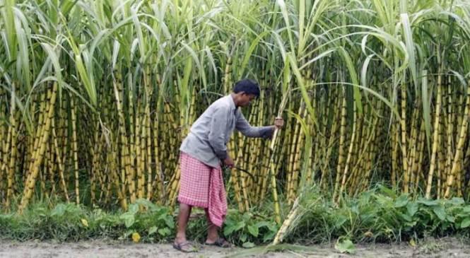 उखु किसानको धर्ना स्थगित, तालाबन्दी भने यथावत