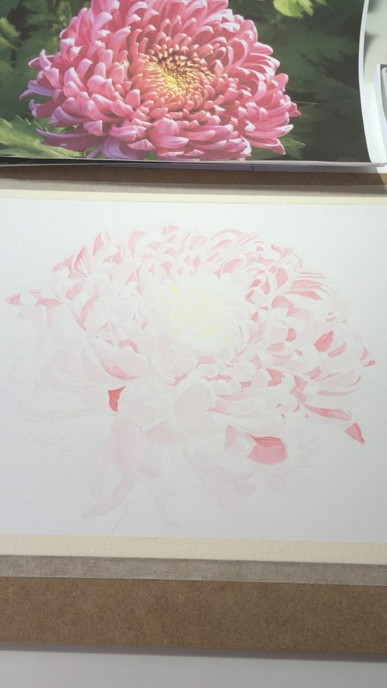 drawing a chrysanthemum with watercolor
