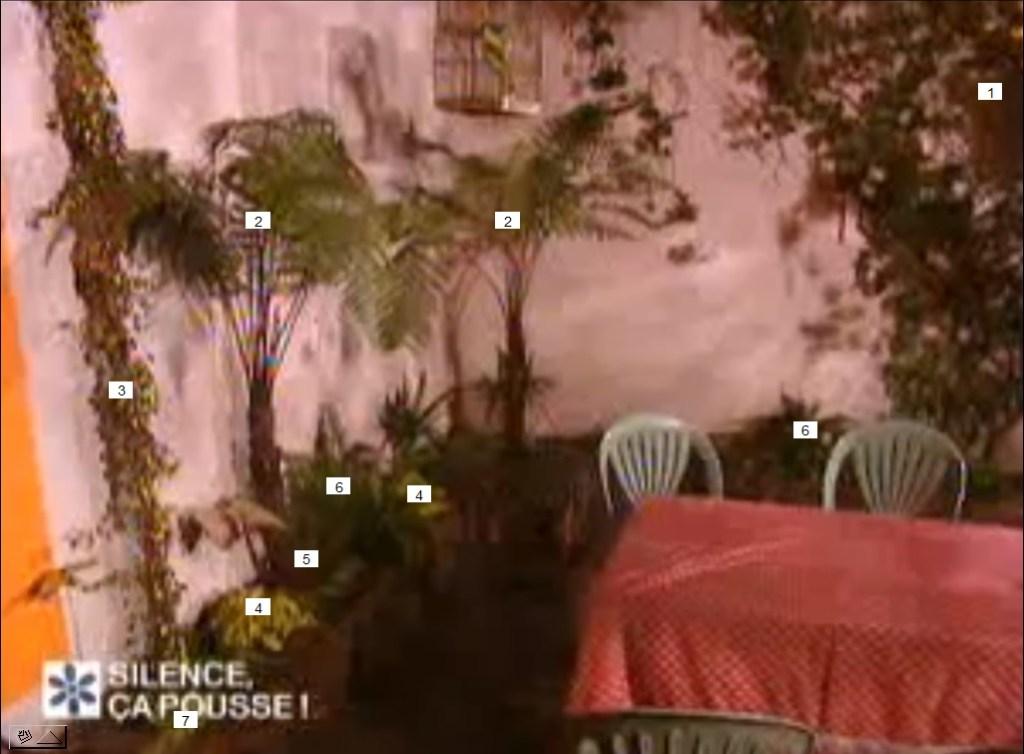 terrasse tropicale paris