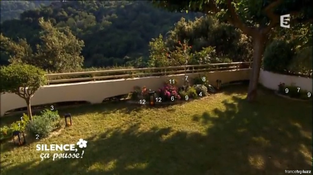 aménager massif plantes mediterranéenes
