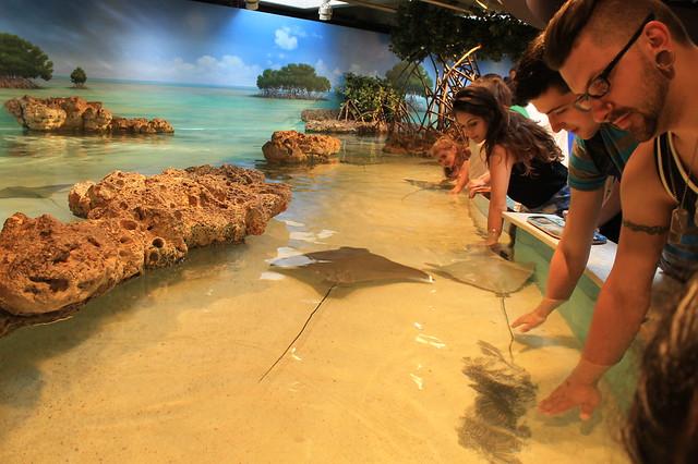 Acariciando peces raya en el acuario de Boston
