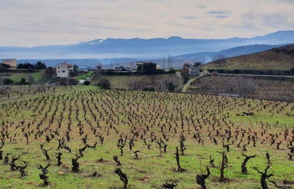 Viñedos Demencia Wine