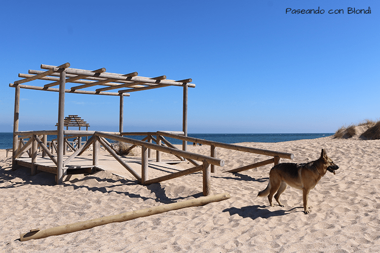 playas-caninas-andalucia.png