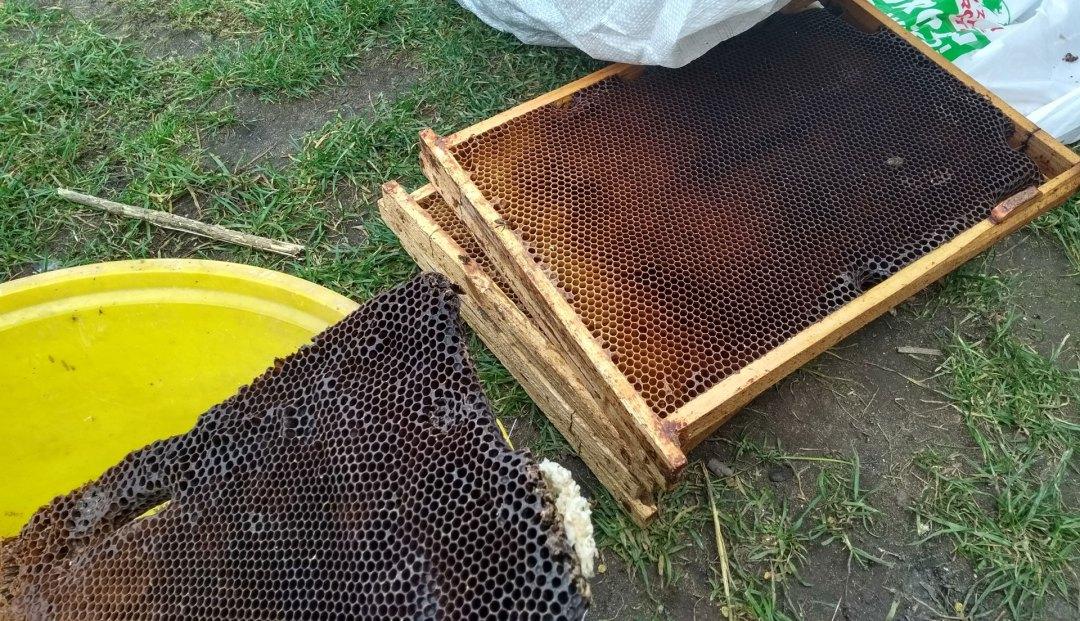 weza pszczela przygotowanie wosku