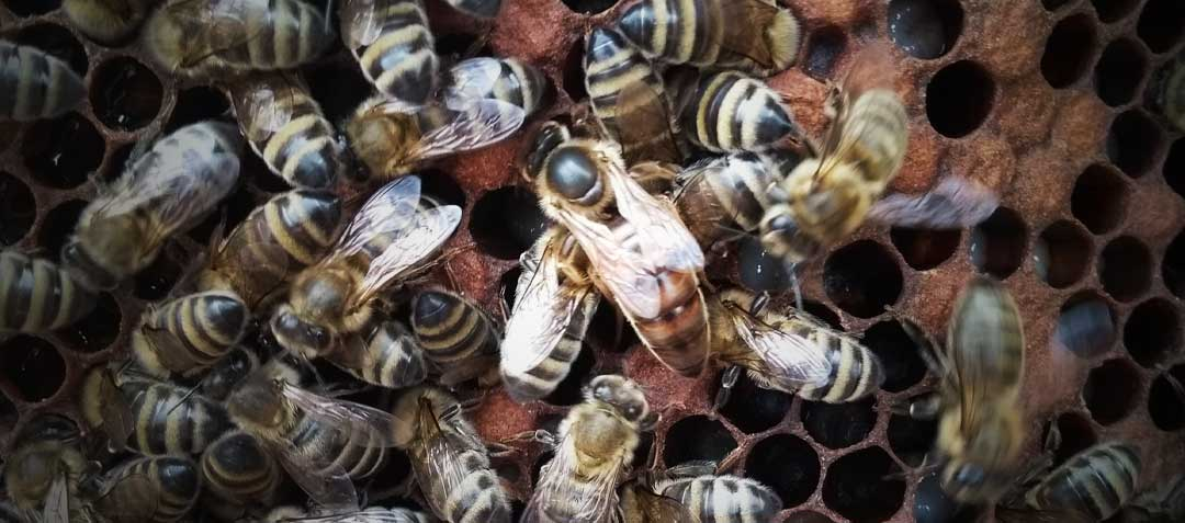 pakiety odklady pszczele