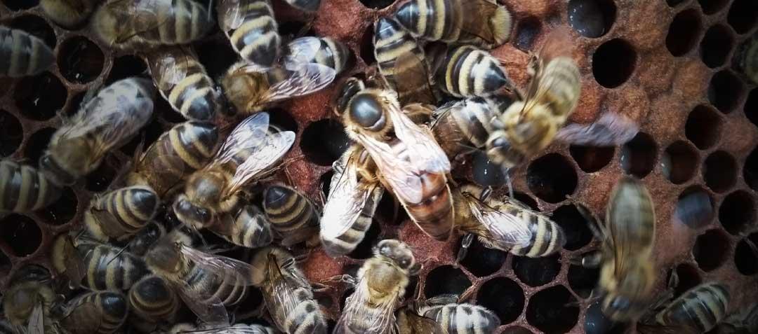Odkłady pszczele vs Pakiety – co wybrać?