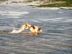 Perro en un corral de pesca.