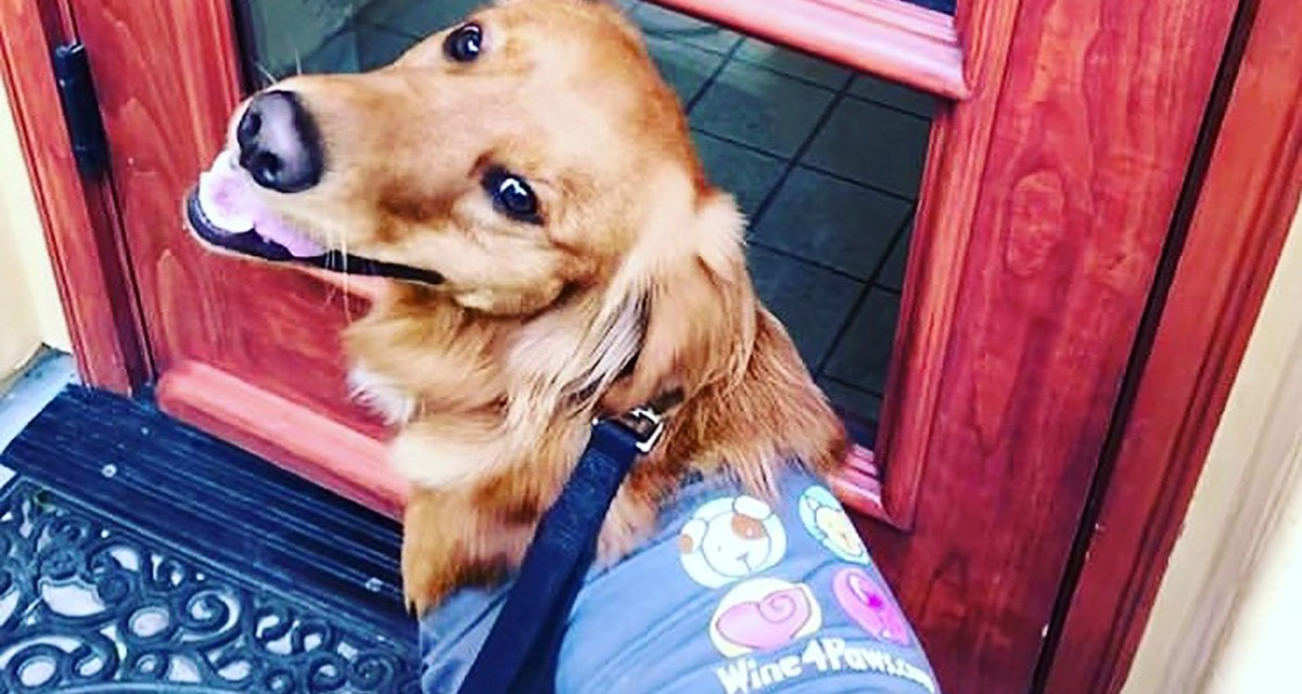 Wine 4 Paws Weekend Set for April 18-19