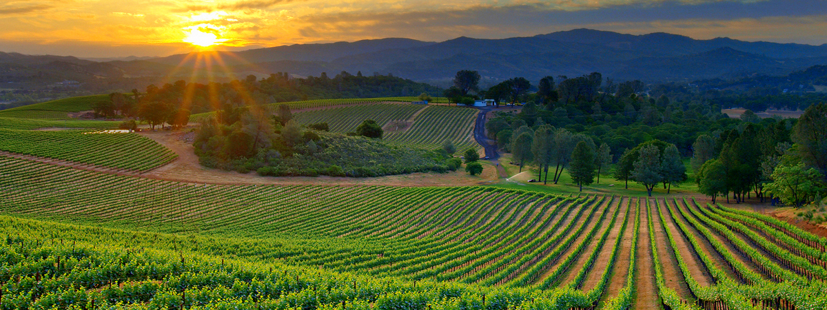 Vineyard Sunset Paso Robles Wineries