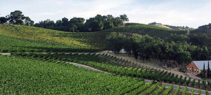 Justin vineyard