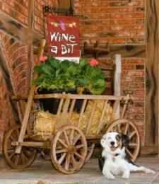 San Marcos Creek Winery Dog