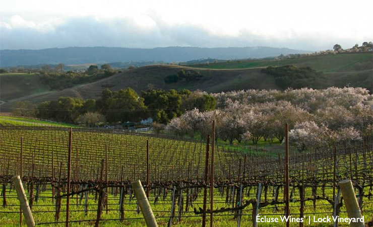 Paso Robles Wineries Close to Downtown