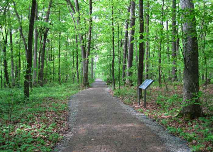 Victory Woods. Courtesy of Saratoga National Historical Park.