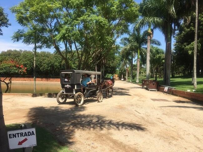 passeio de carruagem pelo parque