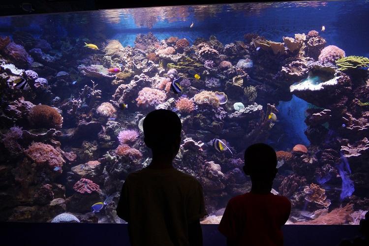 Nova York com crianças - aquario